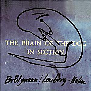 Image of The Brain Of The Dog In Section