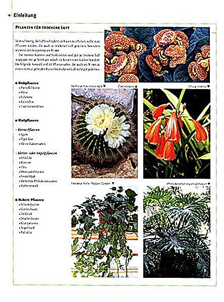 1001 zimmerpflanzen buch jetzt bei online. Black Bedroom Furniture Sets. Home Design Ideas