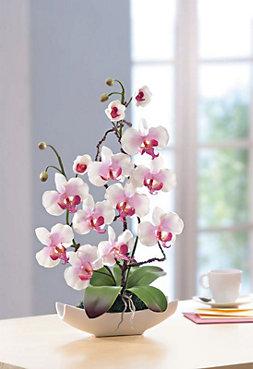 Orchideen arrangement jetzt bei weltbild bestellen altavistaventures Images