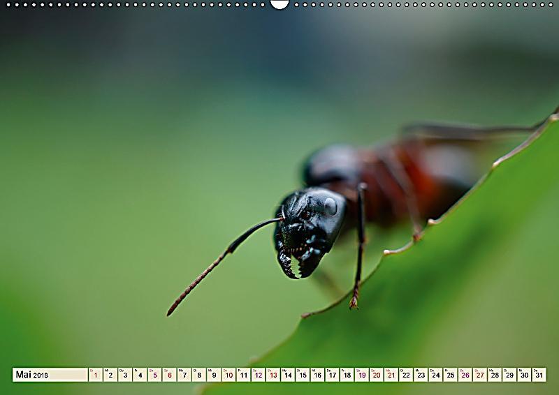 Ameisen ordnung im durcheinander wandkalender 2018 din a2 quer kalender bestellen - Ameisen in der wand ...