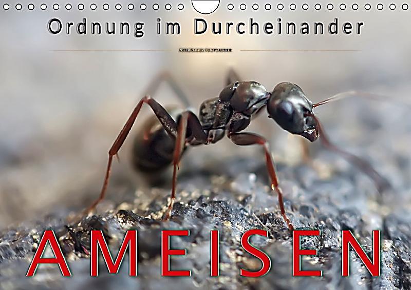 Ameisen ordnung im durcheinander wandkalender 2018 din a4 quer kalender bestellen - Ameisen in der wand ...