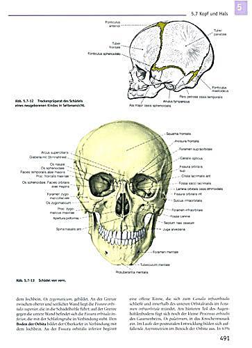 Berühmt Anatomie Malbuch Wynn Kapit Fotos - Ideen färben - blsbooks.com