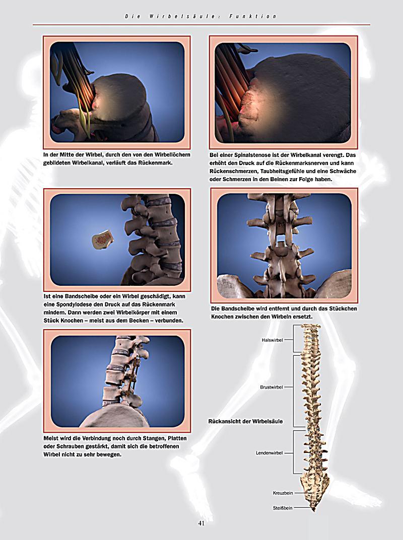Anatomie - Der 3D-Atlas des menschlichen Körpers - Weltbild ...