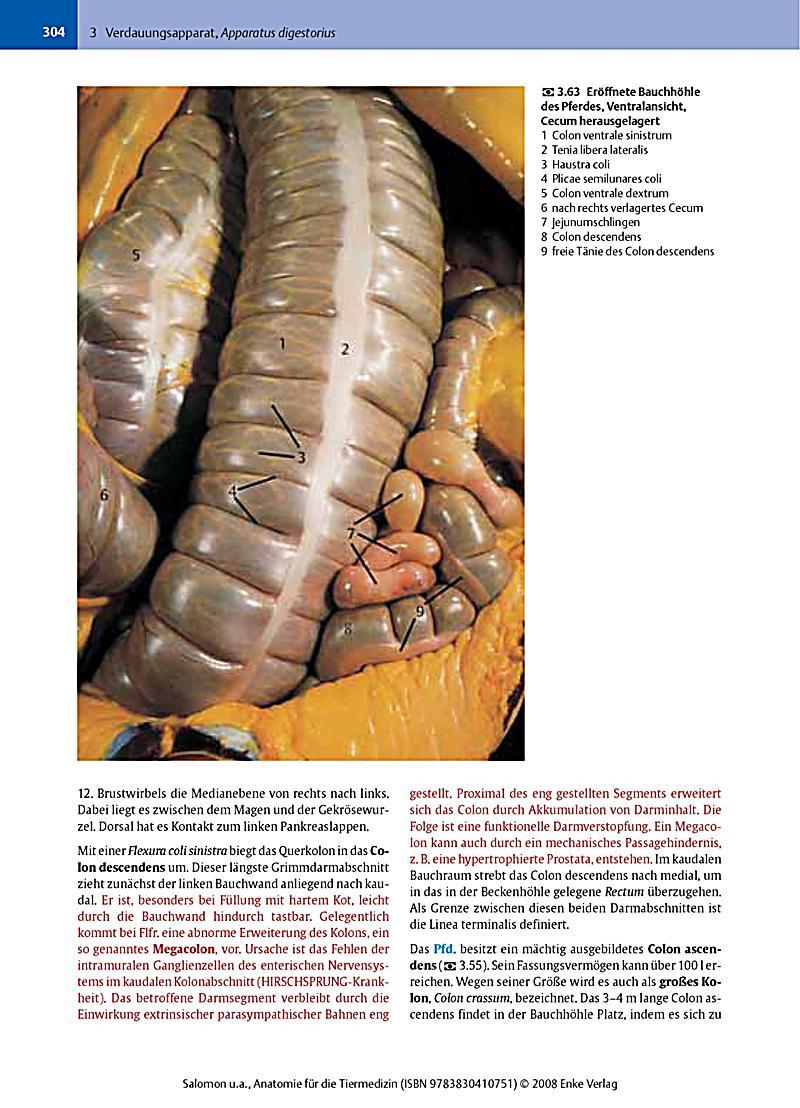 Praxisorientierte Anatomie Propadeutik Pferdes Wissdorf Download ...