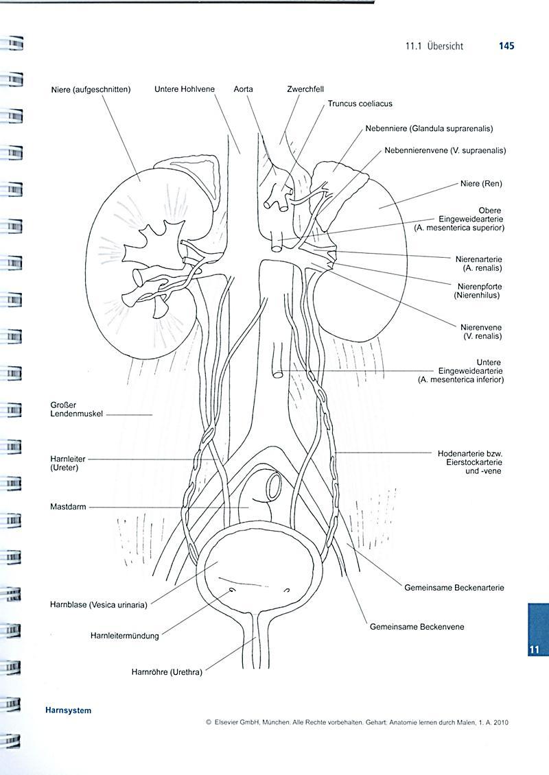 Anatomie lernen durch Malen in Pflege- und Gesundheitsberufen ...