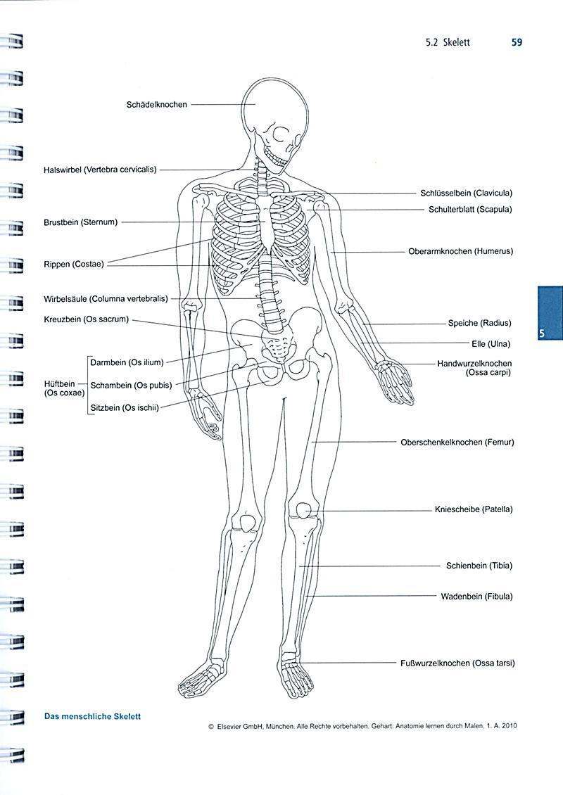 Atemberaubend Was Ist Der Beste Weg Um Anatomie Zu Lernen ...