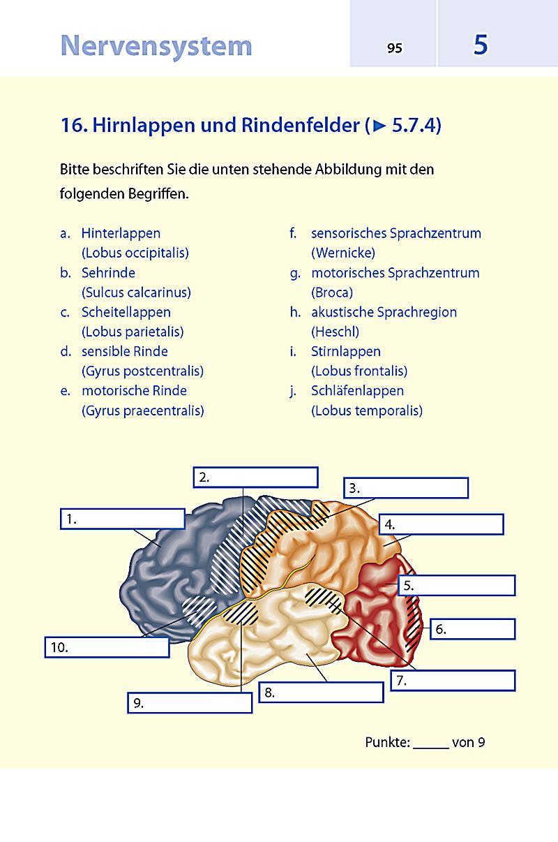 Beste Sehrinde Anatomie Zeitgenössisch - Anatomie Von Menschlichen ...