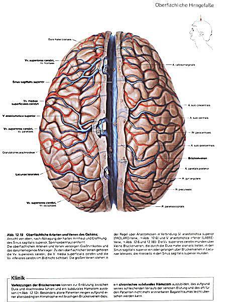 Atlas der Anatomie des Menschen: Gehirn und Rückenmark | Weltbild.ch