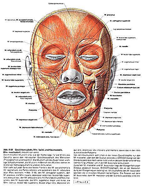 Atlas der Anatomie des Menschen: Kopf, Auge, Ohr Buch versandkostenfrei