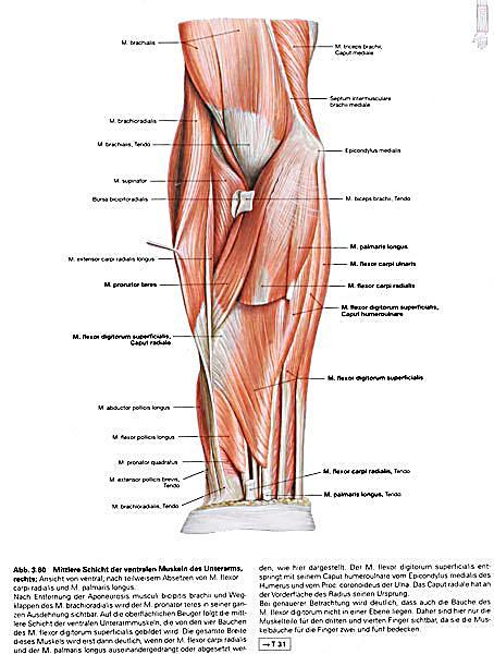 Atlas der Anatomie des Menschen: Obere Extremität Buch versandkostenfrei