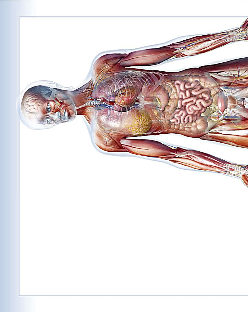 Atlas des menschlichen Körpers Weltbild-Ausgabe portofrei