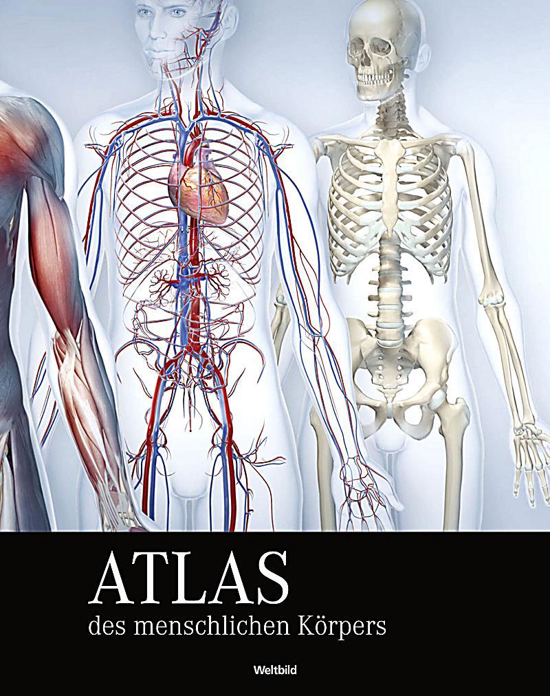 Atemberaubend Atlas Die Menschliche Anatomie Kostenlos Herunterladen ...