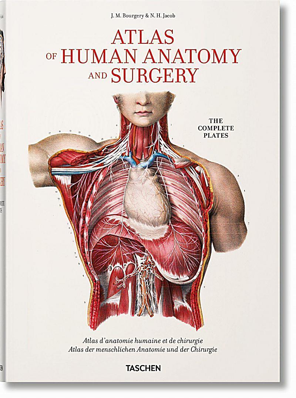 Fantastisch Anatomie Malbücher Bilder - Malvorlagen-Ideen ...