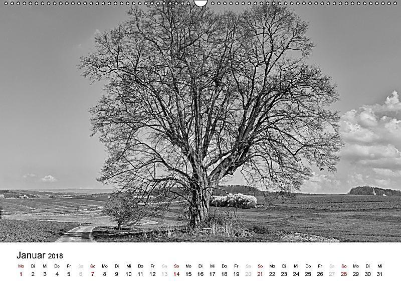 b ume natursch nheiten in schwarz wei wandkalender 2018 din a2 quer kalender bestellen. Black Bedroom Furniture Sets. Home Design Ideas