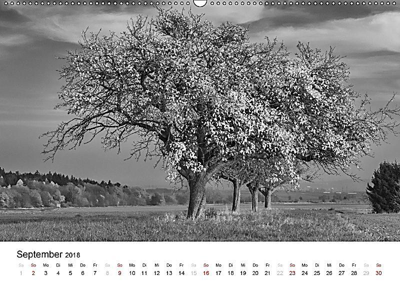 b ume natursch nheiten in schwarz weiss wandkalender 2018 din a2 quer kalender bestellen. Black Bedroom Furniture Sets. Home Design Ideas