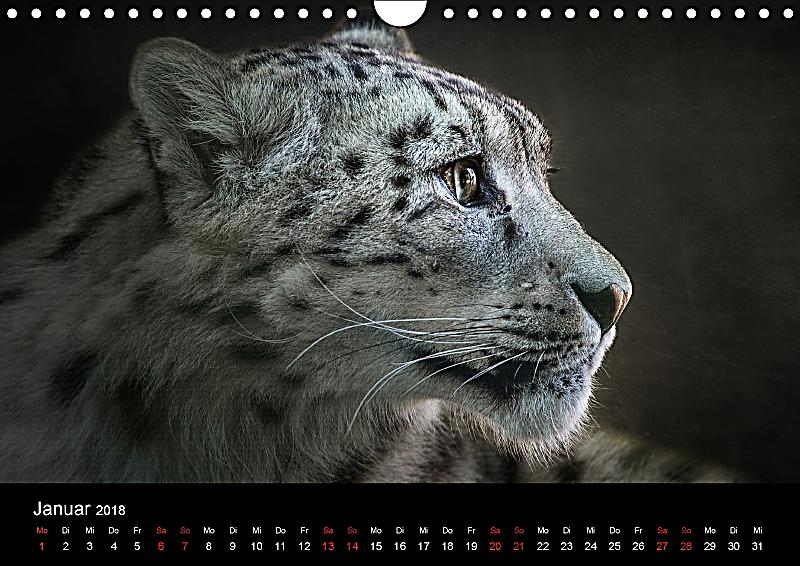 Besondere Fotos F R Tierliebhaber Wandkalender 2018 Din A4