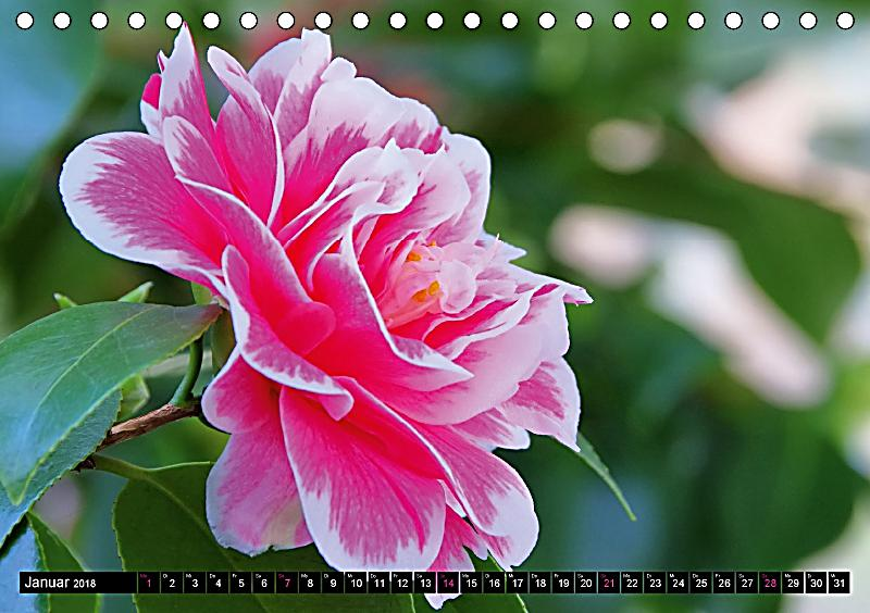 bl tentr ume in rosa und pink tischkalender 2018 din a5 quer kalender bestellen. Black Bedroom Furniture Sets. Home Design Ideas