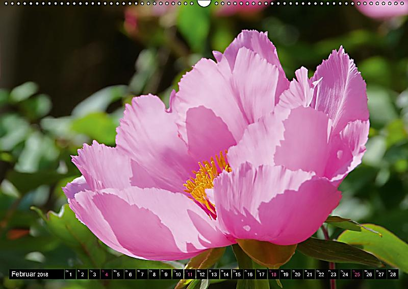 bl tentr ume in rosa und pink wandkalender 2018 din a2 quer kalender bestellen. Black Bedroom Furniture Sets. Home Design Ideas