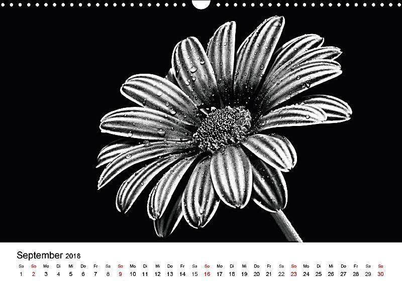 blumen 2018 schwarz weiss wandkalender 2018 din a3 quer dieser erfolgreiche kalender wurde. Black Bedroom Furniture Sets. Home Design Ideas