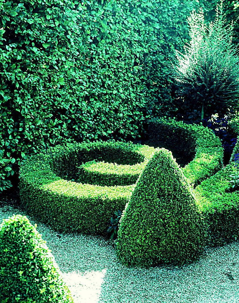 Buchsbaum Hecke 5 Pflanzen jetzt bei Weltbild bestellen