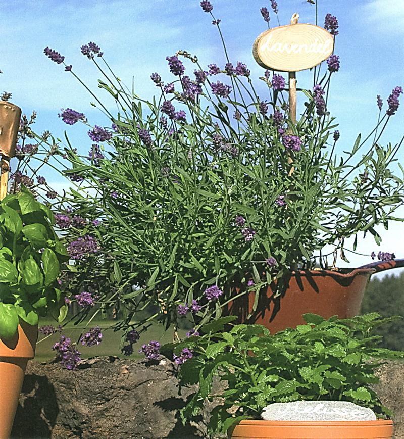Das deko buch f r garten und balkon buch portofrei for Garten und deko