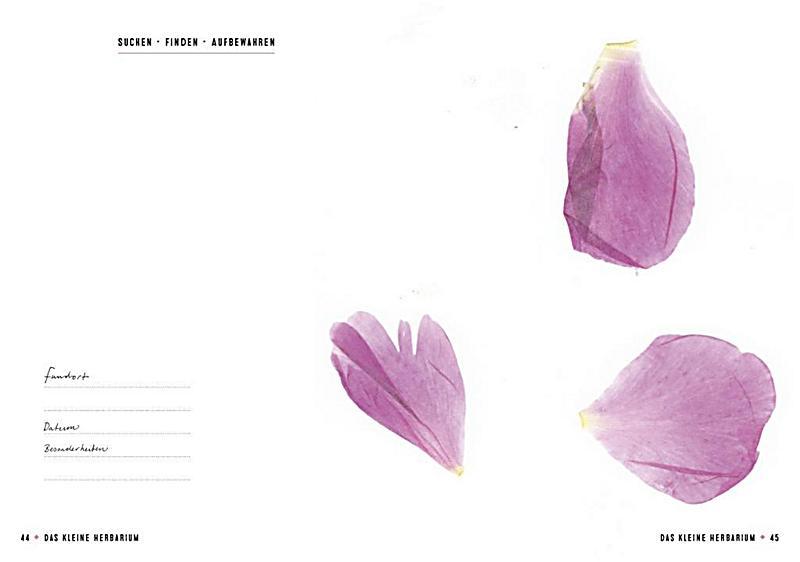 das kleine herbarium buch jetzt bei online bestellen. Black Bedroom Furniture Sets. Home Design Ideas