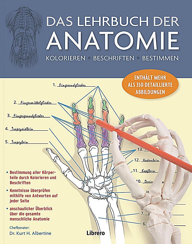 Das Lehrbuch der Anatomie Buch bei Weltbild.ch online bestellen