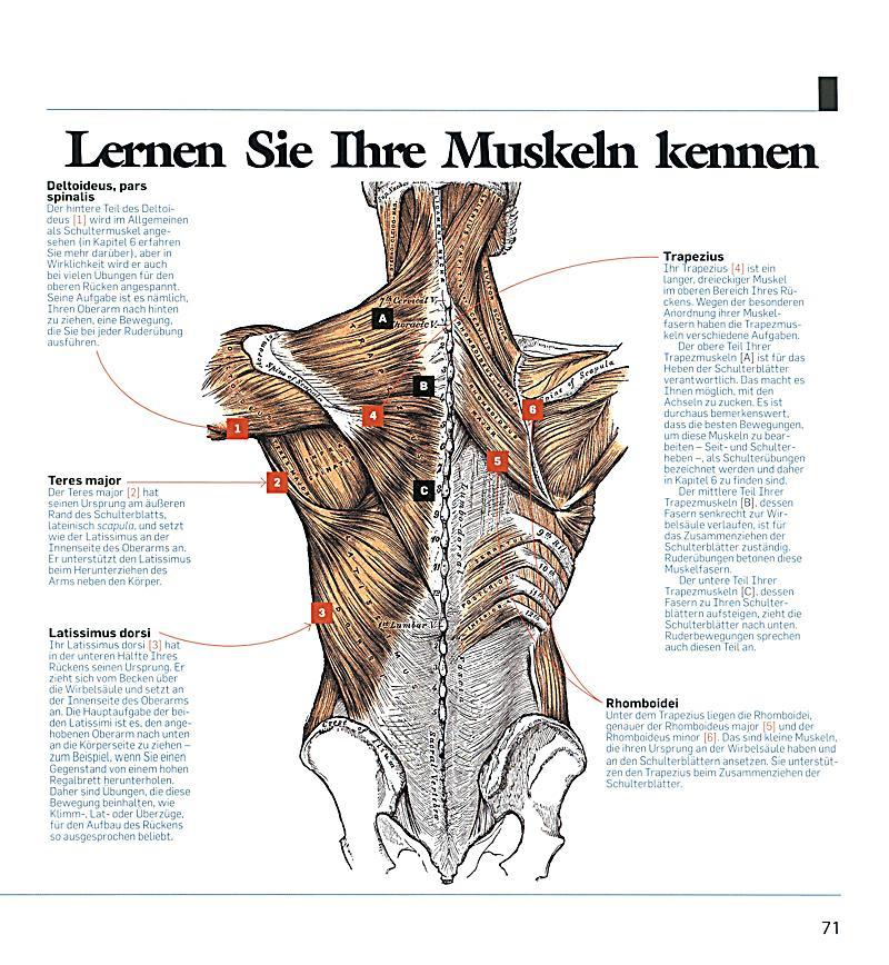 Erfreut Ursprung Des Wortes Anatomie Ideen - Anatomie Ideen ...