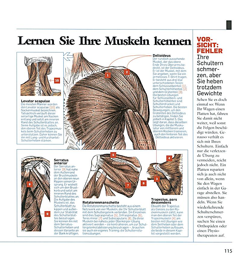 Das Men\'s Health Muskelbuch Buch bei Weltbild.de online bestellen