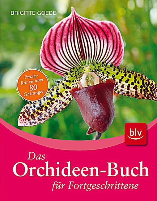 das orchideen buch f r fortgeschrittene buch. Black Bedroom Furniture Sets. Home Design Ideas