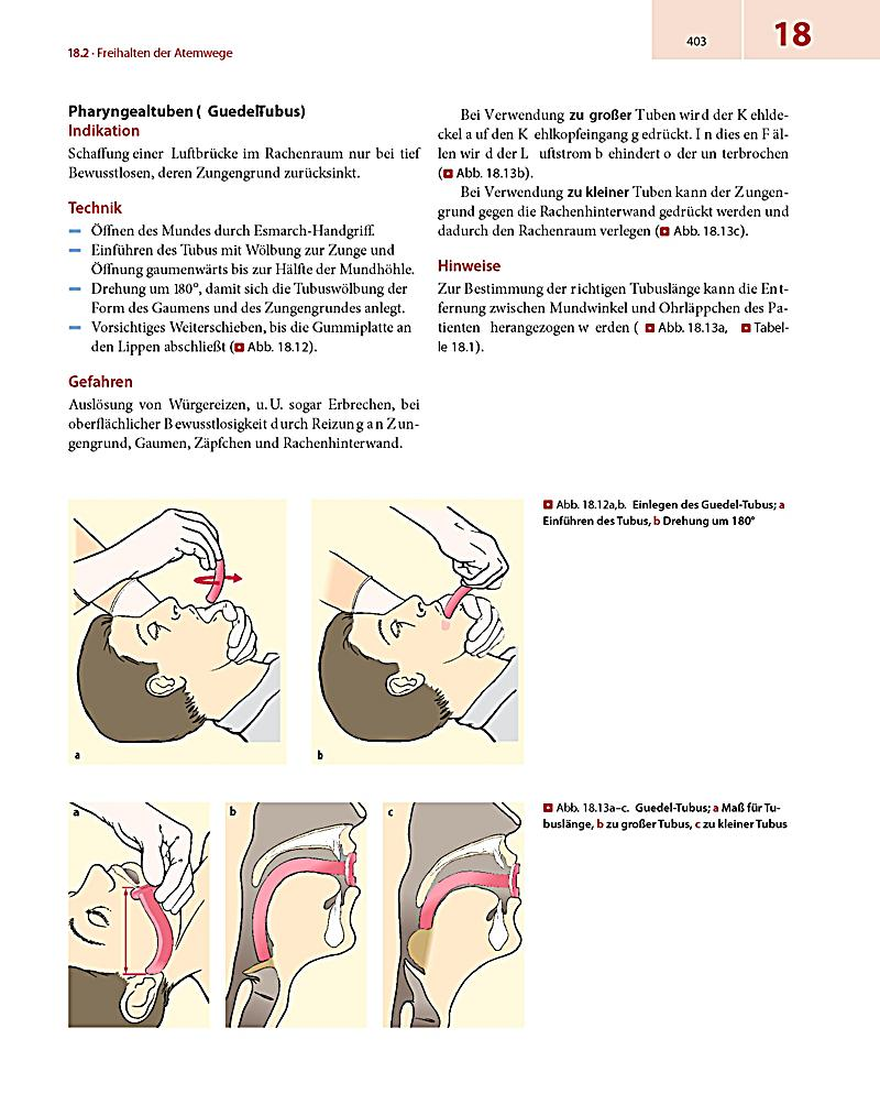 Niedlich Anatomie Des Mundes Und Der Zunge Zeitgenössisch - Anatomie ...