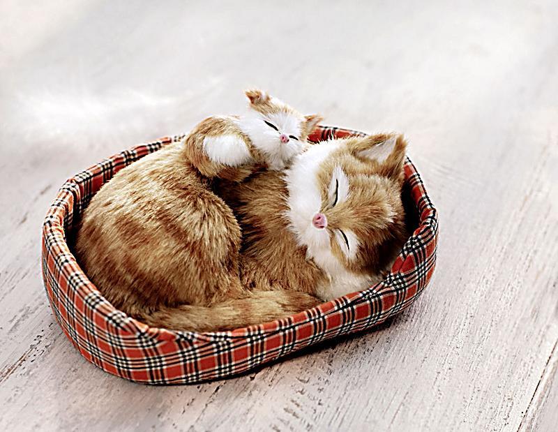 Deko katzen im k rbchen jetzt bei bestellen for Deko katzen gartendekorationen
