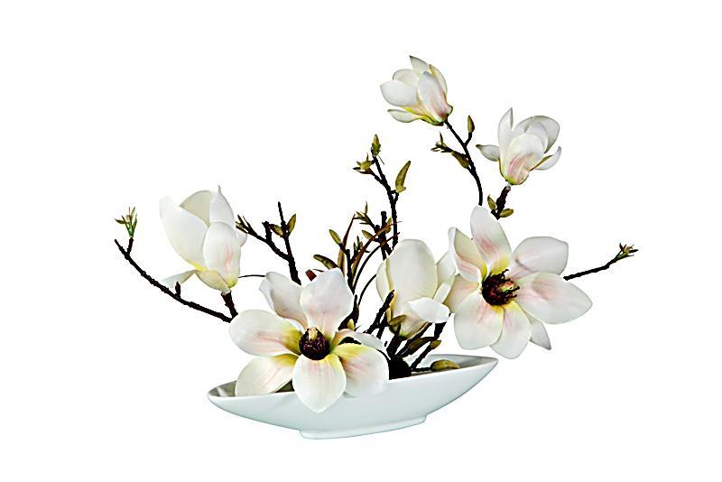Deko magnolie in schale jetzt bei bestellen for Deko bestellen