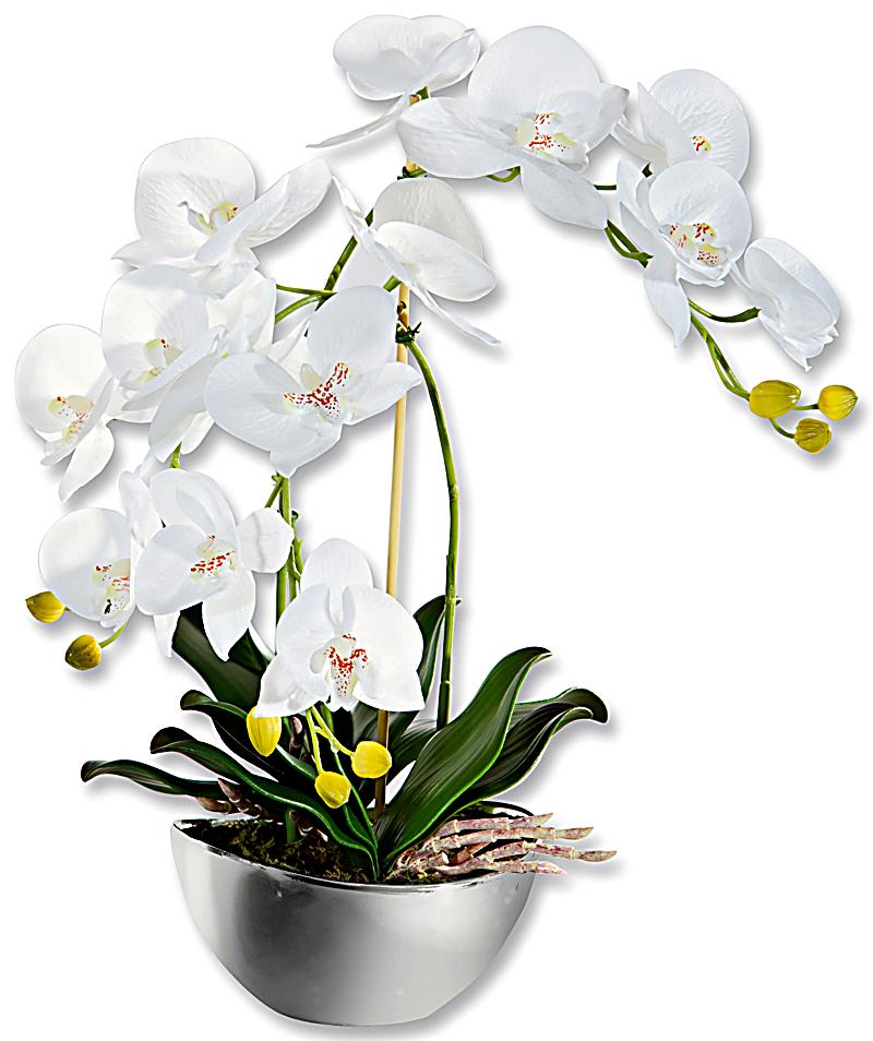 Deko orchidee im design topf jetzt bei bestellen for Design deko