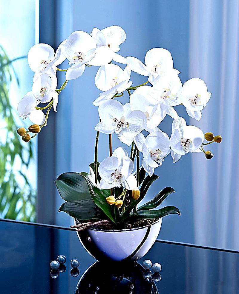 deko orchidee im design topf jetzt bei bestellen. Black Bedroom Furniture Sets. Home Design Ideas