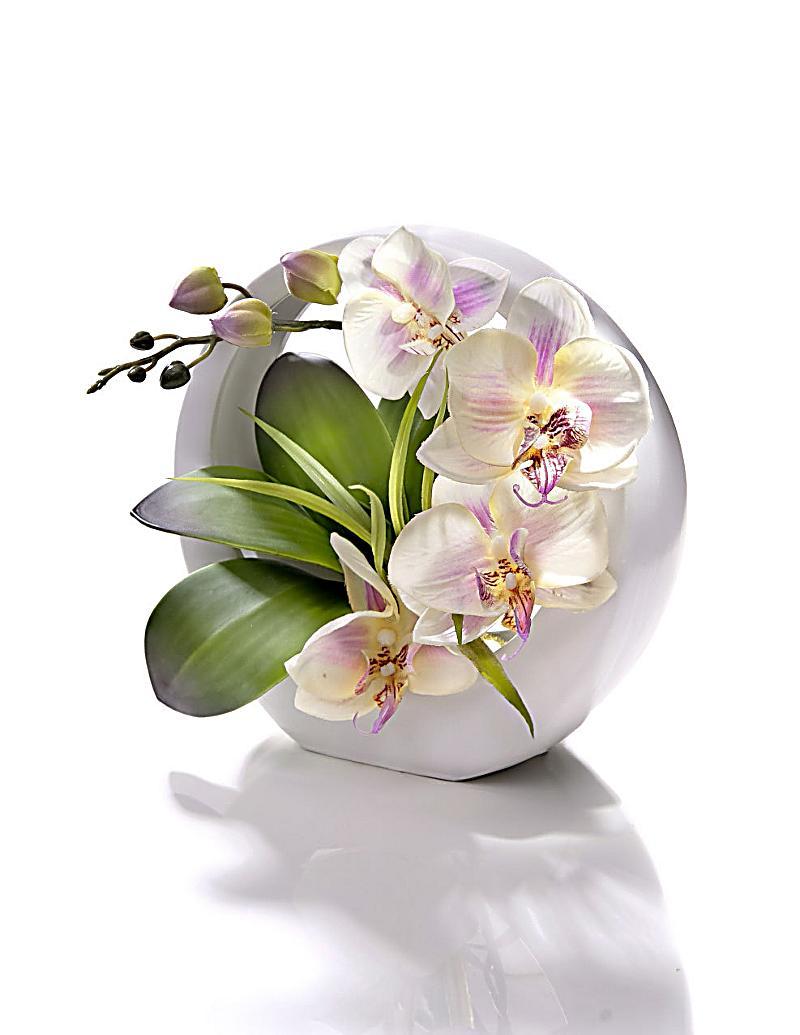 Deko orchidee in ringschale jetzt bei bestellen for Deko bestellen