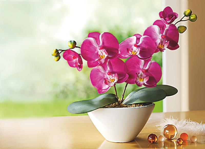 Deko Orchidee