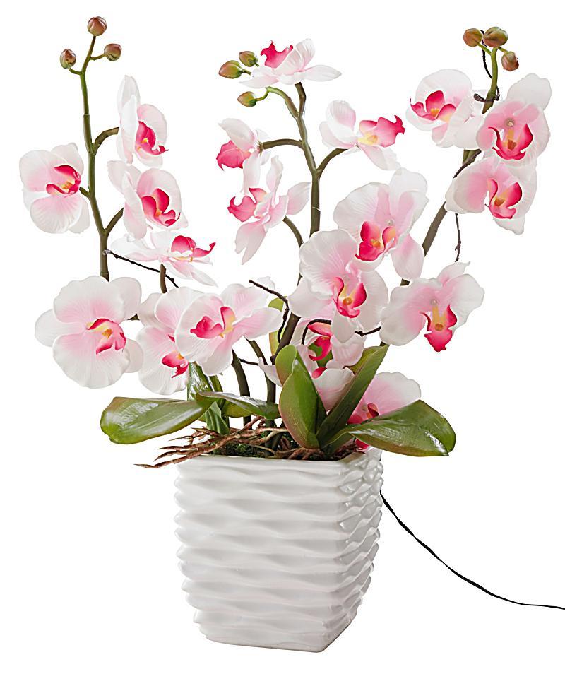 Deko orchidee mit leds jetzt bei bestellen - Orchideen deko ...