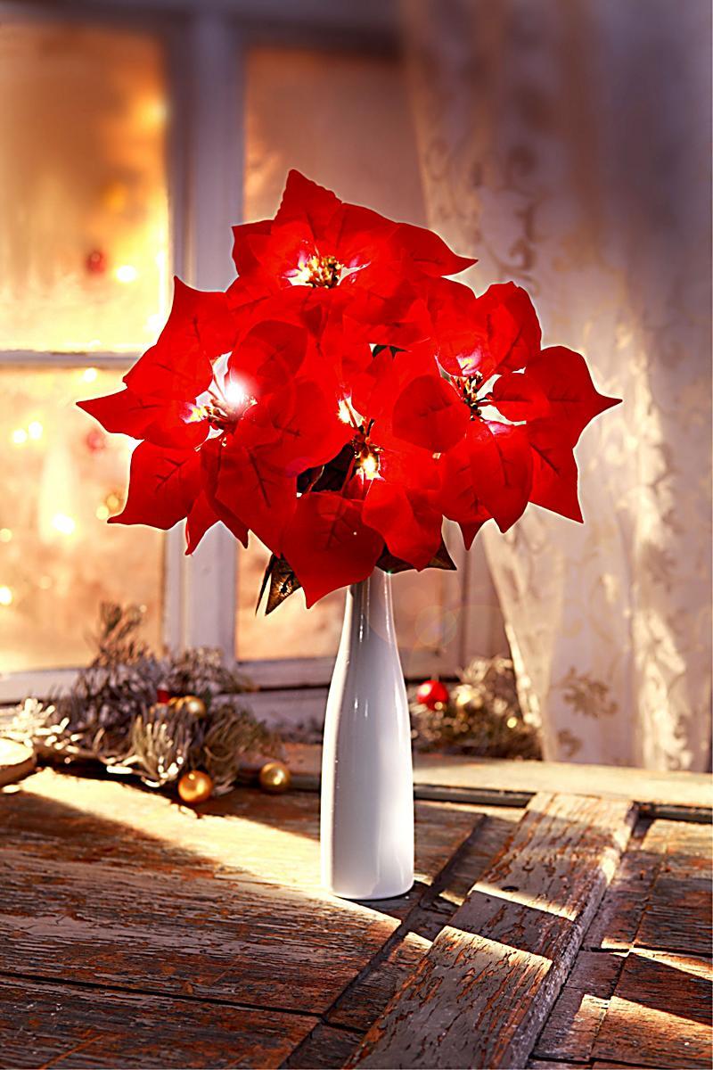 deko weihnachtsstern beleuchtet jetzt bei bestellen. Black Bedroom Furniture Sets. Home Design Ideas