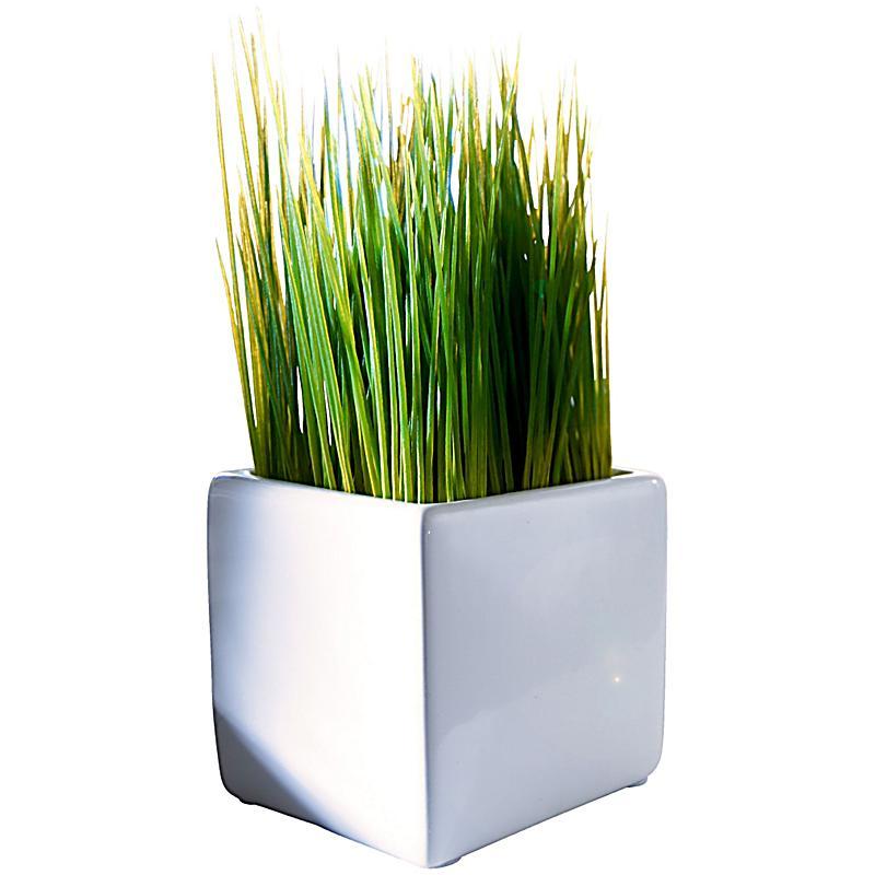 Dekogras im keramiktopf jetzt bei bestellen for Pflanzen bestellen schweiz