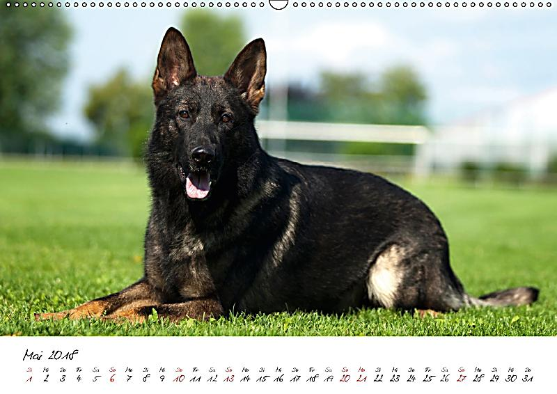 der graue deutsche sch ferhund wandkalender 2018 din a2. Black Bedroom Furniture Sets. Home Design Ideas