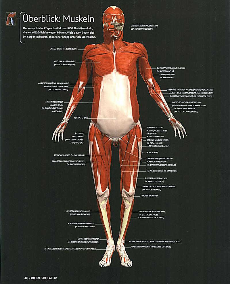 Der menschliche Körper Buch: Weltbild-Ausgabe jetzt kaufen