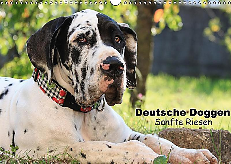 deutsche doggen sanfte riesen wandkalender 2018 din a3. Black Bedroom Furniture Sets. Home Design Ideas