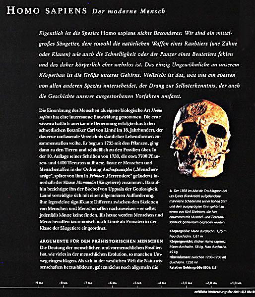 Die Lymphorgane Des Menschen: Die Evolution Des Menschen Buch Bei Weltbild.de Online