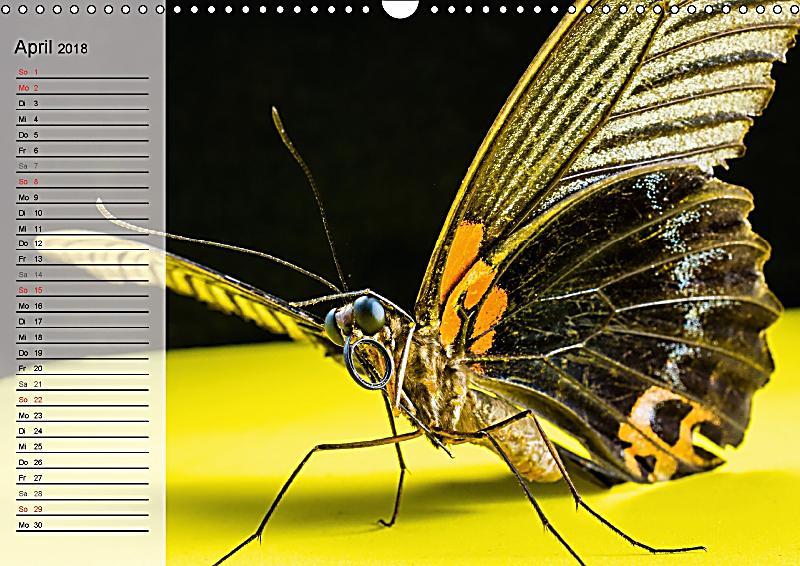 die geheimnisvolle welt der insekten wandkalender 2018 din a3 quer kalender bestellen. Black Bedroom Furniture Sets. Home Design Ideas