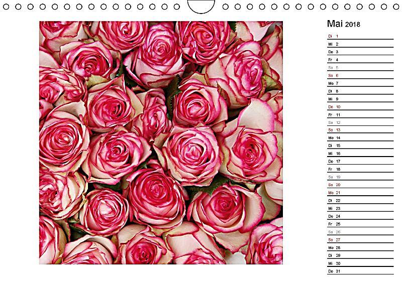 die vielen gesichter der rosen wandkalender 2018 din a4. Black Bedroom Furniture Sets. Home Design Ideas