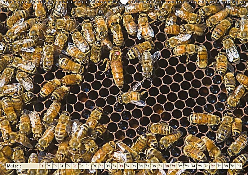 die welt der imkerei bl ten bienen honig wandkalender 2018 din a2 quer kalender bestellen. Black Bedroom Furniture Sets. Home Design Ideas