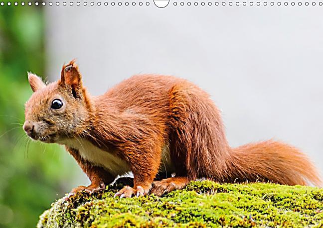 Eichhörnchen Im Garten : eichh rnchen im garten posterbuch din a4 quer buch ~ Watch28wear.com Haus und Dekorationen