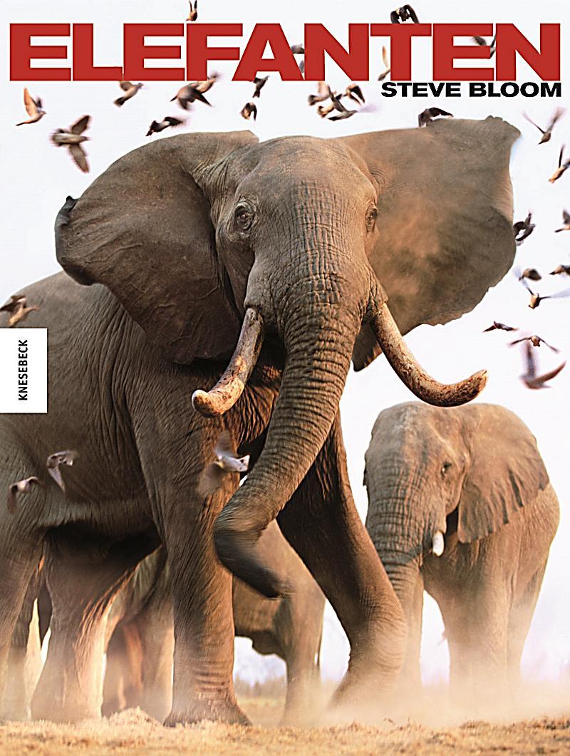 elefanten buch im online shop von bestellen. Black Bedroom Furniture Sets. Home Design Ideas
