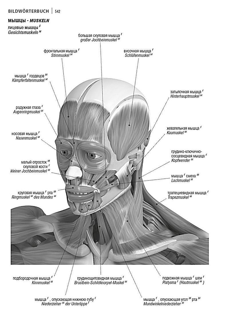 Beste Tmj Muskeln Anatomie Fotos - Anatomie Ideen - finotti.info